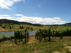 Summer in the vineyard