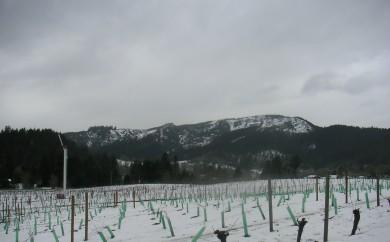 Snowy Oregon vineyard