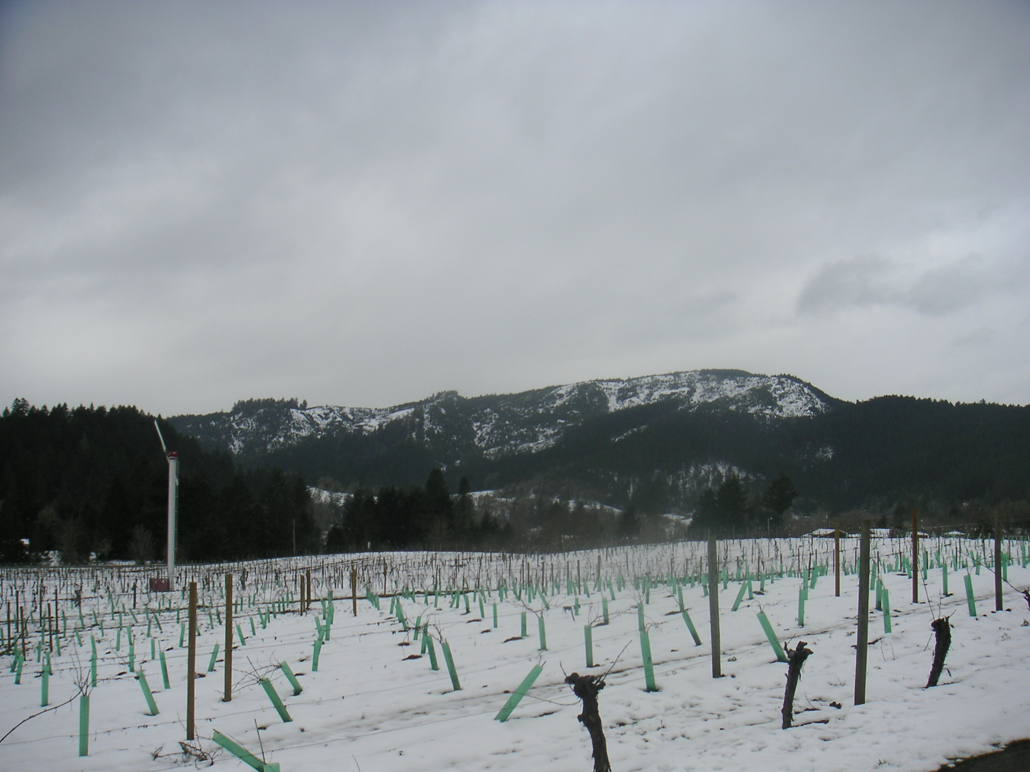 Snowy Oregon vineyard