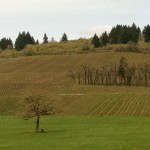 Wine tasting in the Dundee Hills over Memorial Day weekend