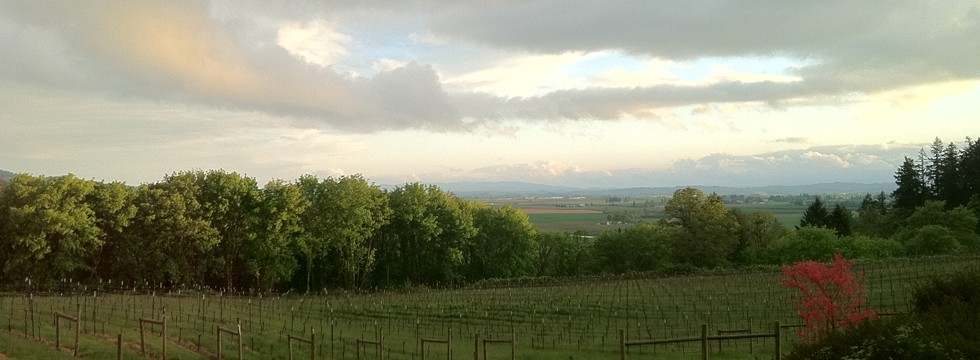 Chemeketa vineyard
