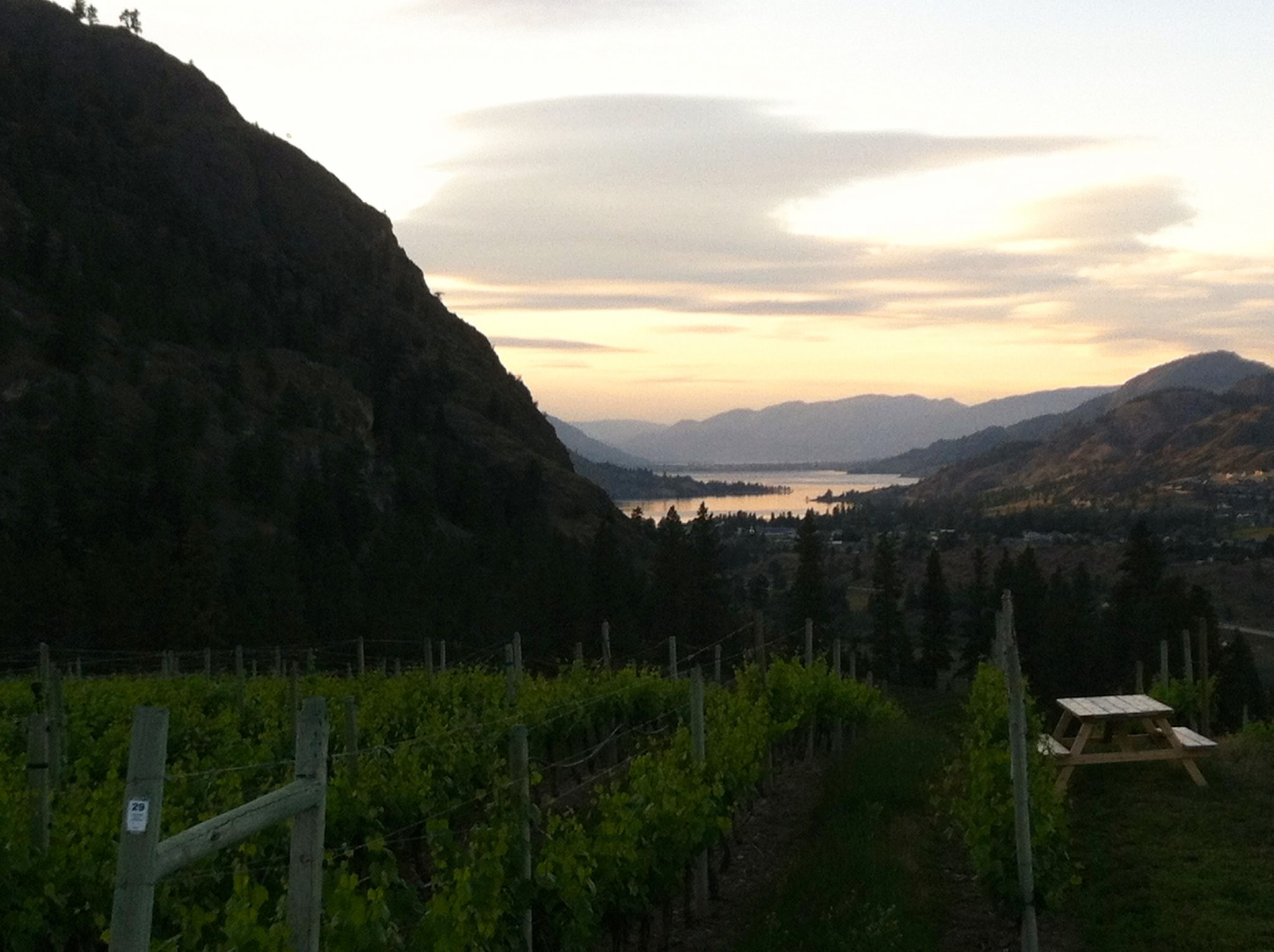 Vineyard in Penticton, BC