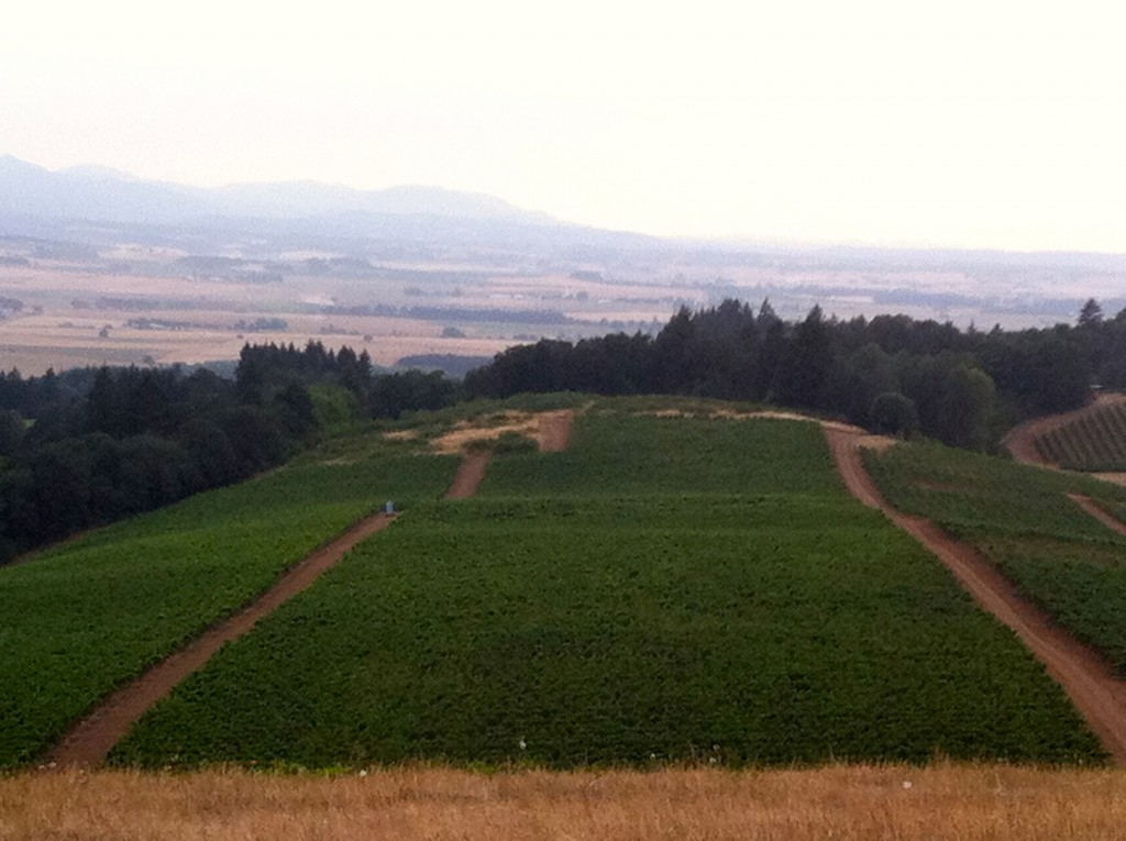 Temperance Hill Vineyard