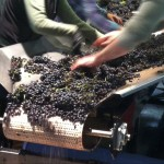 Peek behind the vino veil by volunteering at a PDX urban winery