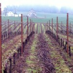 Viticulture 101: Pruning grapevines
