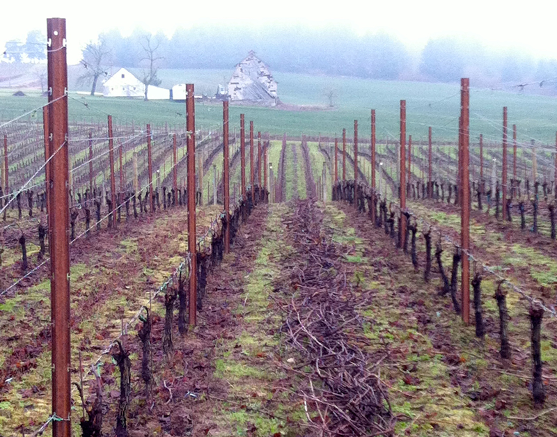 Viticulture 101- Pruning grapevines6
