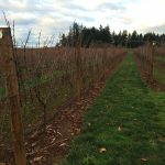 Spend Thanksgiving weekend in Oregon's Wine Country