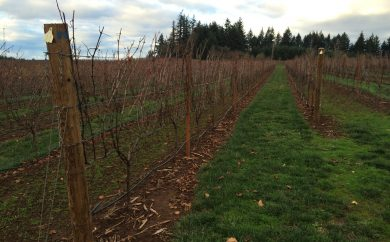 Late fall in the vineyard