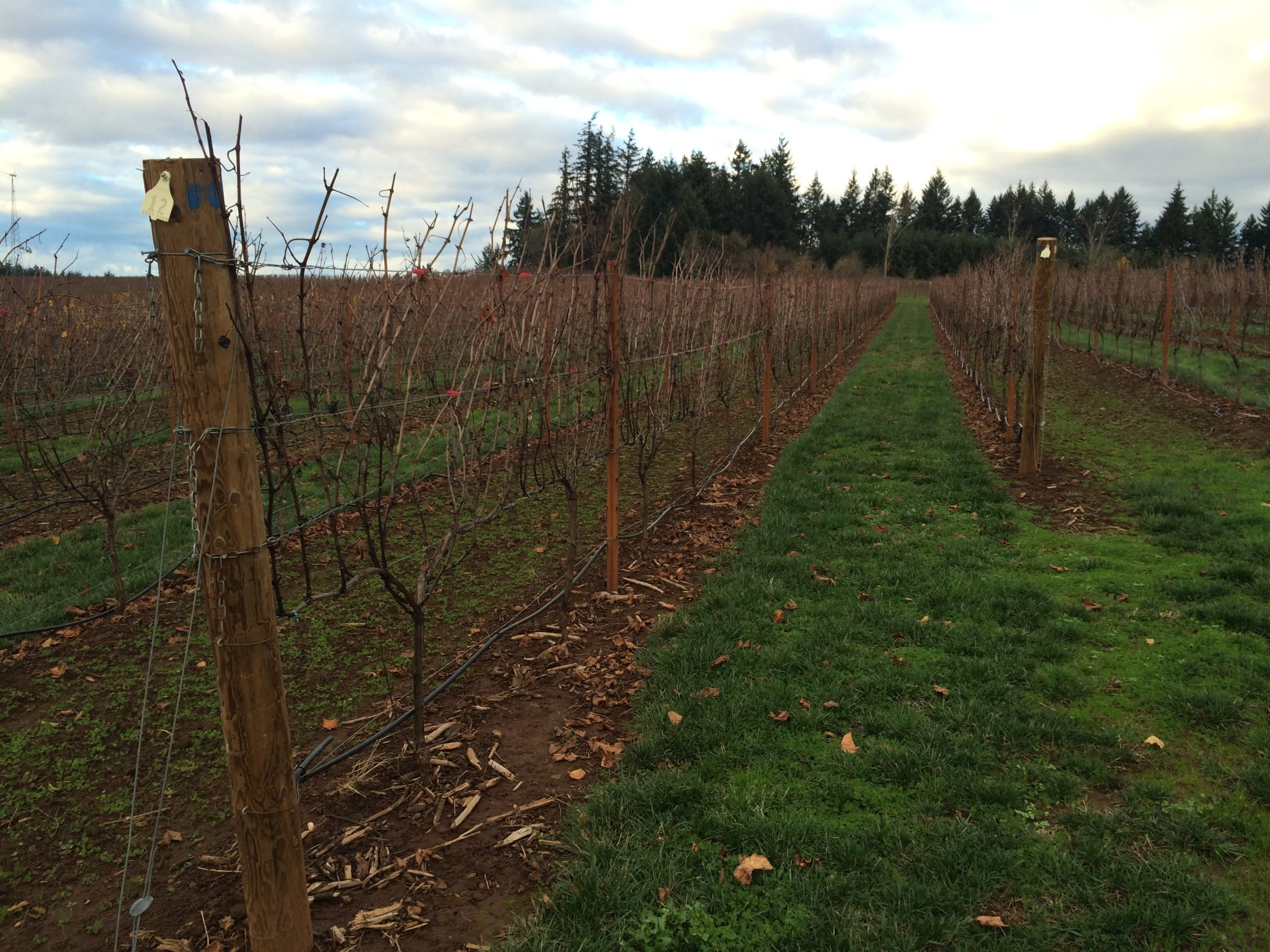 Spend Thanksgiving weekend in Oregon&#8217;s Wine Country<span class=