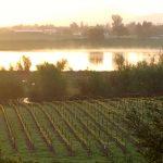 Winery Spotlight: Lynmar Estate in Sonoma, California